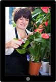 Onderhoud de productpresentaties in de bloemenwinkel