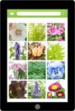 Assortimentskennis buitenplanten (app)
