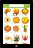 Assortimentskennis snijbloemen (app)